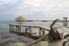 Dead Palm and Piers Royalty Free Stock Photos