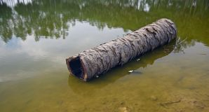 A dead palm tree parts fallen in the water royalty free stock photography