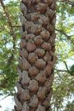 Dead palm tree Stock Photos