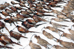 Dead Pheasants Stock Photo