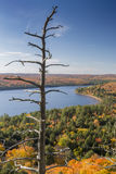 Dead Pine and Lake Surrounded by Fall Foliage - Ontario. Dead pine tree and brilliant fall foliage- Overlooking an autumn lake in Algonquin Provincial Park Royalty Free Stock Image