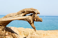 dead pine plant and    mediterranean see Stock Images