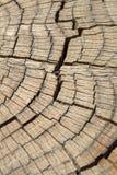 Dead pine tree trunk Stock Image