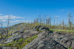 Dead Pine Trees And Barren Rock Of A Summit Royalty Free Stock Images