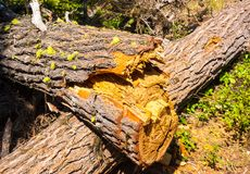 Tree trunks rotting in a forest Royalty Free Stock Photos