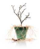 Dead plant. In a pot Royalty Free Stock Photo