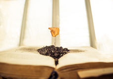 Dead plant over book. Open vintage book infront closed window with dead dry plant Stock Photography