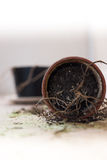 Dead plant in a tipped over flower pot Royalty Free Stock Photography