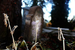Dead plants in graveyard. Dead plants in front of a grave before Halloween Stock Photos