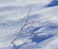 Dead plants in hoarfrost Royalty Free Stock Photo