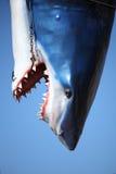 Dead Plastic Shark Stock Photography