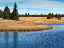 Dead pond, Ore Mountains, Czech republic Royalty Free Stock Photo