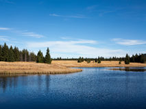 Dead pond, Ore Mountains, Czech republic Royalty Free Stock Images