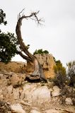 Dead Quirky Tree at the Top of Grand Canyon. Park Royalty Free Stock Photos