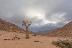 Dead Quiver Tree Stock Image
