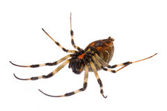 Dead Rainforest Spider Stock Photography