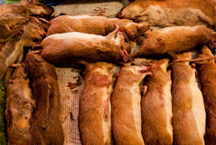 Dead rats in rural market Stock Photography
