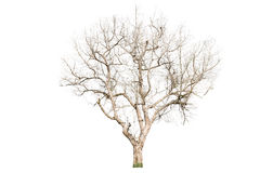 Dead ree Stock Photography