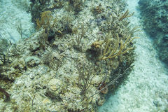 Dead reef Stock Photos