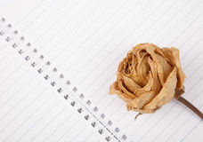 Dead rose on book Stock Images