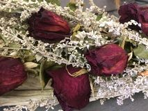 The dead rose bouquet royalty free stock photo