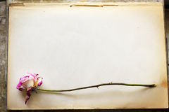 Dead rose on old paper Royalty Free Stock Photos