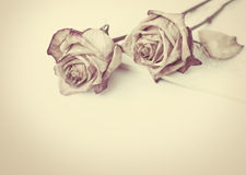 Dead rose. withered rose Royalty Free Stock Image