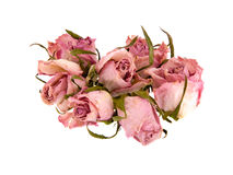 Dead Rosebuds Royalty Free Stock Photography