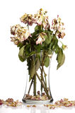 Dead Roses. Bouquet of withered roses in glass vase Stock Image