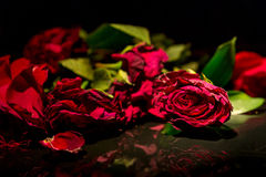 Dead Roses Royalty Free Stock Photography