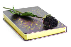 Dead roses and book. Stock Image