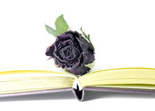 Dead roses and book. Stock Photography