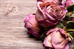 Dead roses on vintage wooden background Royalty Free Stock Photo