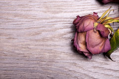 Dead roses on vintage wooden background Royalty Free Stock Image