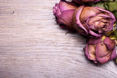 Dead roses on vintage wooden background Royalty Free Stock Photos