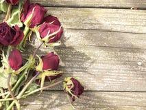 Dead roses on wood Stock Photos