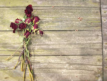 Dead roses on wood Stock Photography