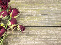 Dead roses on wood Royalty Free Stock Image