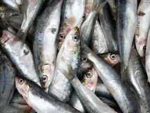 Dead sardines Stock Photography