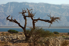 By the Dead Sea Stock Images