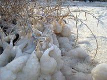 Dead Sea. Hydrochloric crystals on the Dead Sea Royalty Free Stock Photo