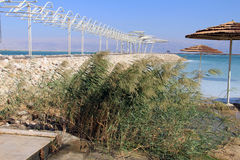 Dead Sea beach Royalty Free Stock Images