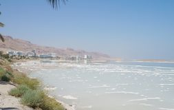 Dead sea, branch of palm tree, beach hotels Royalty Free Stock Photo