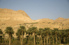 Dead sea and Ein Gedi Royalty Free Stock Image