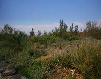 Dead Sea Road landscape. Scenic view of green landscape viewed from the Dead Sea Road, Amman, Jordan Stock Photography
