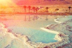 Dead sea salt shore. Palm trees on the shores of the Dead Sea stock photos