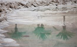 Dead Sea salt stones and crystals and reflection of three palm trees at the Dead Sea. Israel stock photography