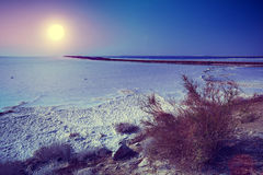 Dead sea salty shore Royalty Free Stock Photo
