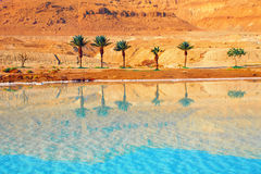 Dead Sea seashore Stock Images