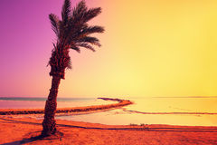 Dead Sea shore with palm tree Royalty Free Stock Photography
